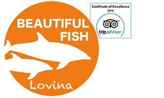 Beautiful Fish Lovina